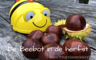 Beebot in de herfst