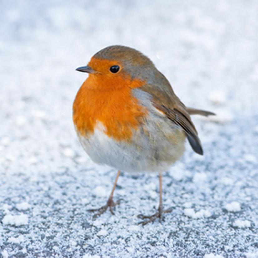 Vogels tellen ~een 21 eeuwse winteractiviteit