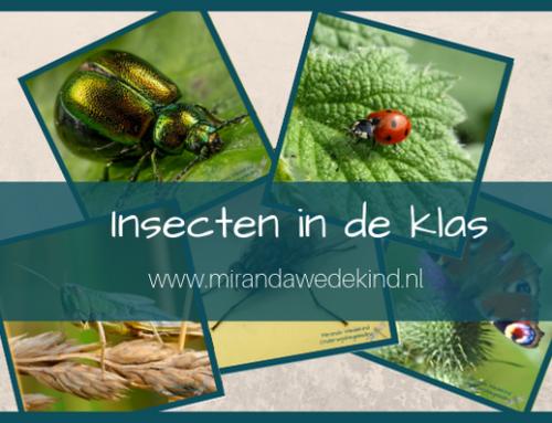 Insecten in de klas