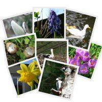 Beebotkaarten thema Lente (seizoenen)