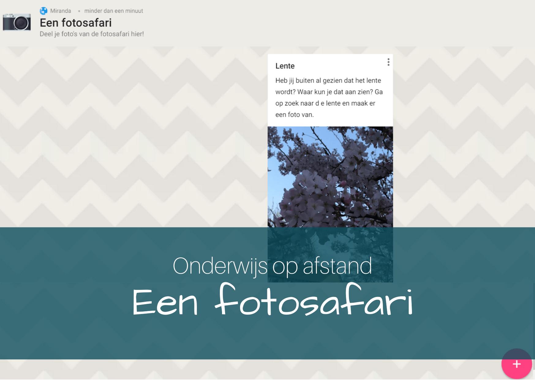 Onderwijs op afstand: een fotosafari